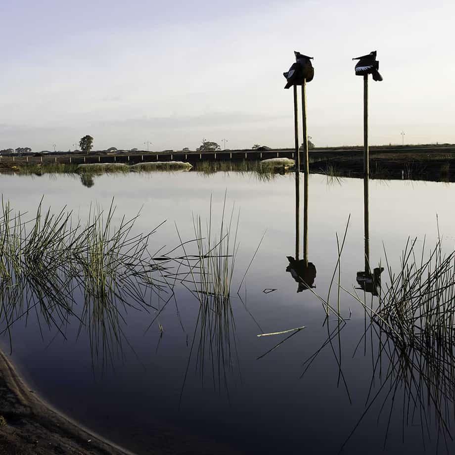 Pelicans--Fabricated-Steel-[Outdoor,Corten]Kooper-Folko--australian--sculpture-outdoor-garden-art-pelican-bird-sculpture